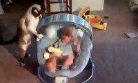 Gato Juega Con El Juguete Del Bebe! ★ Gato divertido gato chistoso gato tierno loco risa humor