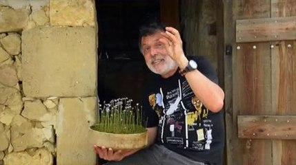 Drôles de carnivores. Utricularia dichotoma Jean-Jacques Labat