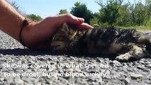 De l'amour et des caresses font revivre ce chaton abandonné dans la rue