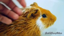 From life guinea pigs. Cute guinea pigs