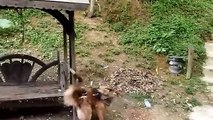 Animals have fun. The cheerful dog, and funny naughty monkey
