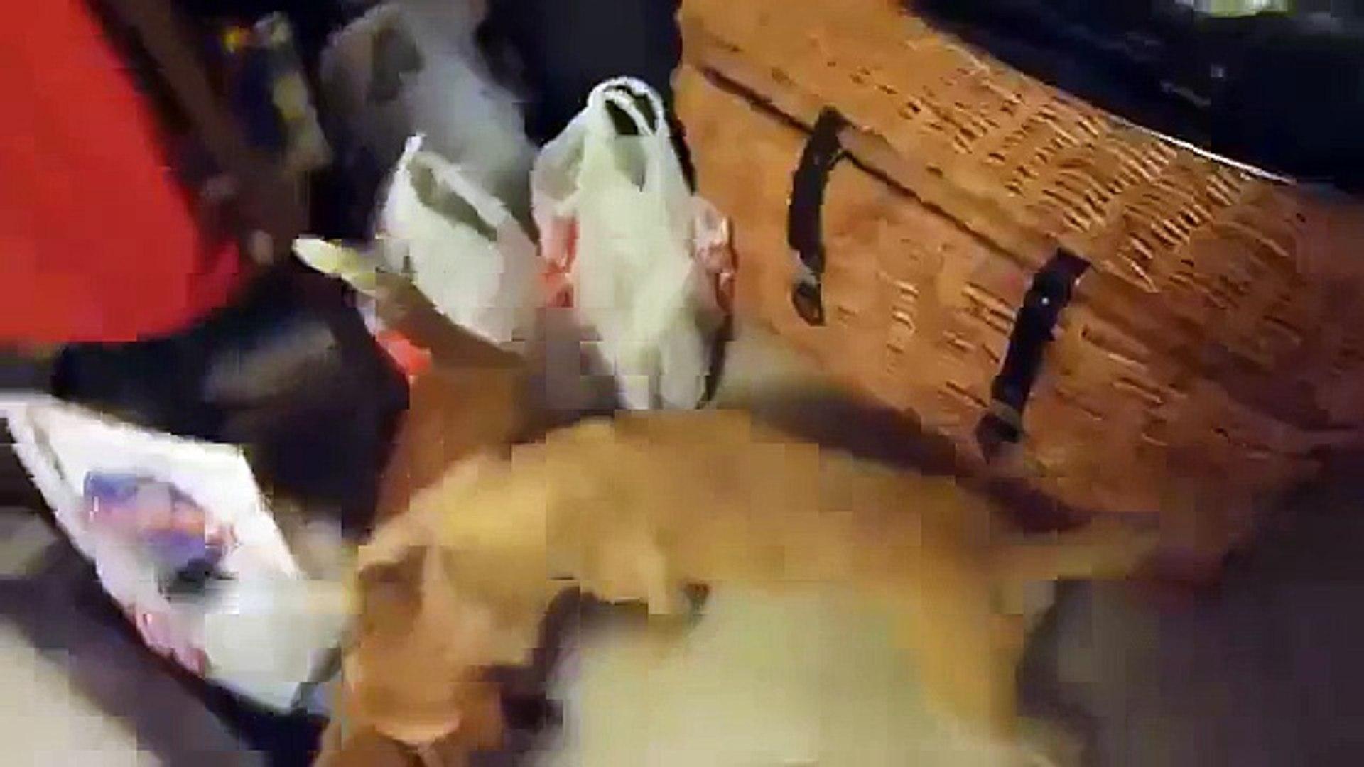 Vine Cat and dog sex Perro haciendo sexo con gat