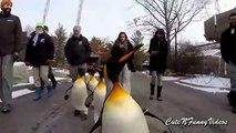De la vida de los pingüinos (parte 3). Diversión con los pingüinos