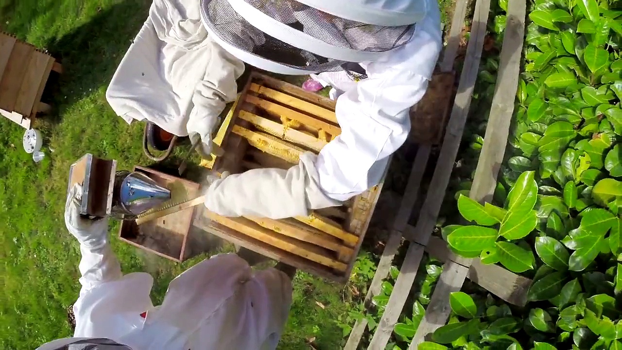 Beekeeping with Maddie and Mum