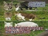 Des chats portent des poissons morts dans une émission Japonaise débile