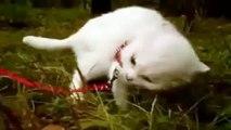 ★ QUE TE PASO KITTY - humor gatos - video divertido gatos chistosos risa