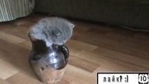 Gatinho em um vaso. Gatinho engraçado e mãe gato