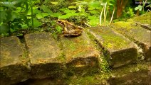 JUMPING FROGS ★ Funny Jumping Contest   Compilation
