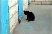 Un chat aide un chien anxieux à sortir d'un mur