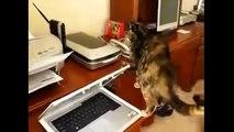 Katzen Video Lustige Katzen Videos in nur einer Compilation !!! #3
