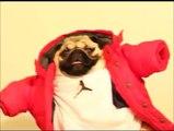 Hilarious Drake's Hip Hop dog! Call me on my cellphone parody
