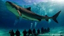 Megalodon Shark Caught on Tape Eats Great White, Real Dragon, UFO