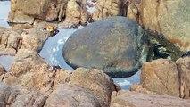 Polvo NINJA salta fora da água para capturar caranguejo distraído