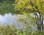 #4 Record Breaking Fish Pike, Rudd, Tench & Grayling Part-1 Fish Fishing Videos