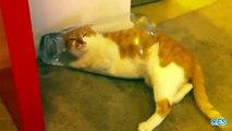 Banques de chats. Amusez-vous avec les chats et les banques