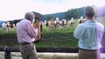 Concierto para vacas. Vaca divertida con música en vivo