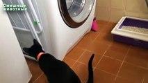Chats et machines à laver. Chats drôles à regarder le travail des machines à laver