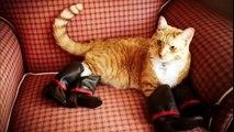 Chats et chiens de porter des chaussures. Chiens et chats en bottes