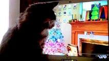 Chats attraper la souris. Funny cats chasse curseur
