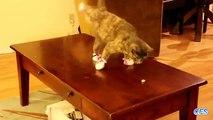 Chats portent des chaussettes. Funny cats en chaussettes