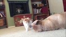 Un chaton et un gros chien. Drôle chaton jouant avec un gros chien
