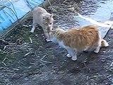 Chats divisent le territoire. Conversation deux chats drôles