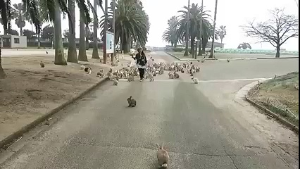 Army of Rabbits