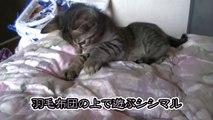 【第63話】ココ掘れニャンニャンする子猫(面白い&可愛い子猫)