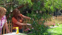 Summer Fruit Tree Pruning Tips