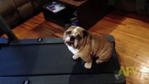 Tombiş Köpeğin Egzersizden Kaçış Denemeleri