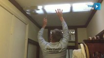 How to Remove a Six-Foot Carpet Python From Your Light Fixture
