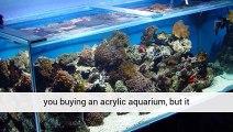 Aquarium Plants Uk Store Store Cornwall