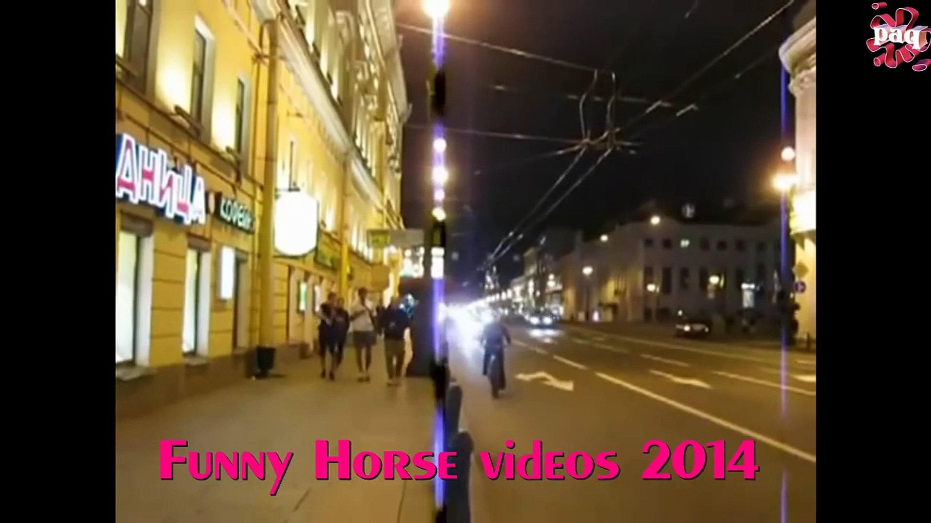 Funniest Horse Videos Video Dailymotion