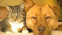 Los gatos Y los Perros Amigos para Siempre Compilación || HD NUEVO