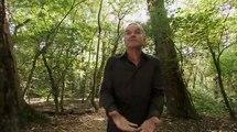 Документальный фильм про траву. Марихуанна, каннабис. Фильм BBC про один из самых популярных наркотиков в мире.