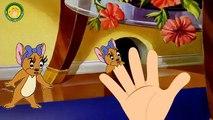 Tom And Jerry Cartoons JERRY Finger Family ( Tom and Jerry) Nursery Rhyme By MY FINGER FAMILY RHYMES