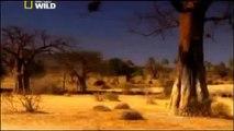 Documentary Lion Battle zone full documentary wildlife animals 2013 HD,Documentary (TV Gen