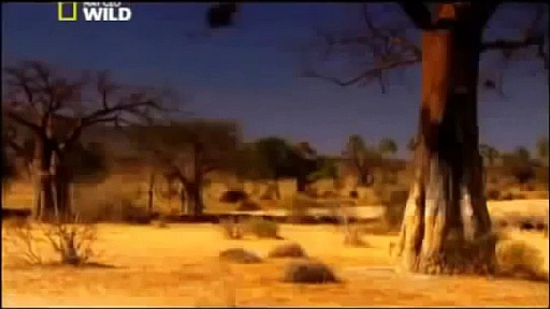 Documentary Lion Battle zone full documentary wildlife animals 2013 HD,Documentary (TV Gen