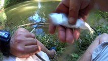 Pêche au coup en rivière (gardons et chevesnes)