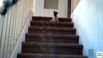 Escadas para cachorros. Cão engraçado na escada
