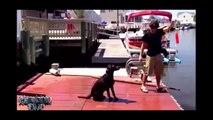 Video divertenti animali pazzi, Video da ridere. Da morire dalle risate #14