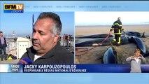 """Dix baleines échouées à Calais: """"On est dans l'exceptionnel"""""""