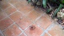 Le vortex de la fourmi