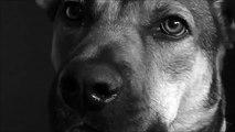 Amour chien. Drôle chien avec amour dans ses yeux