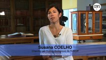 Susana Coelho, chercheuse, Station biologique de Roscoff