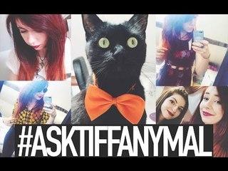 #ASKTIFFANYMAL + REPONSE FAQ | Because Cats