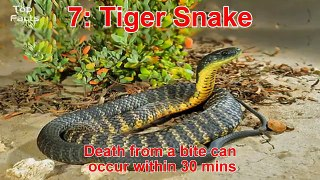 Top 10 Most Deadliest and Venomous Snakes in the World Most