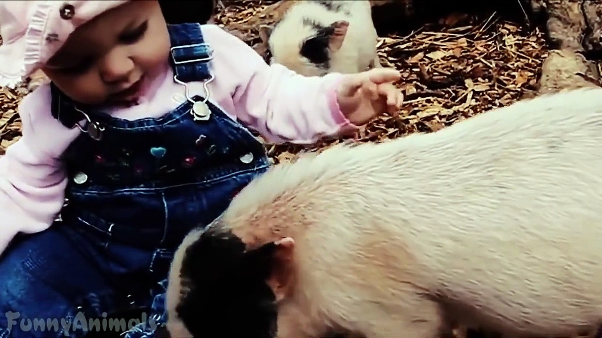 Cute Micro Pig - A Cute Mini Pig Videos Compilation - Best Mini Pig Videos