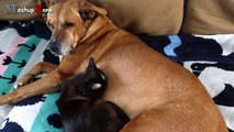 Cats And Dogs Friends Forever Compilation || NEW HD