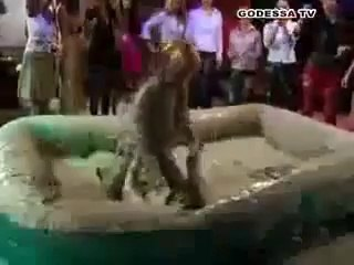 Hot girls having fun in the mud Wrestling without dress